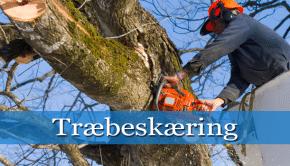 træbeskæring thumpnail