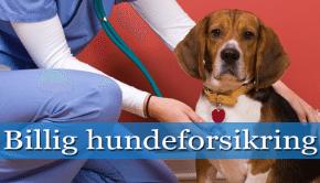 billig hundeforsikring thumpnail