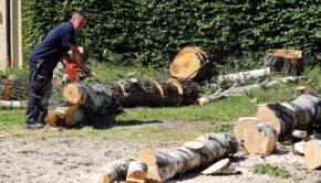 Anlægsgartner fælder træ